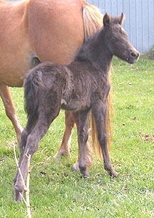 Filly out of Oneka's Supreme Surprise