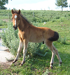 Colt out of McCall's BB Passionate Blue
