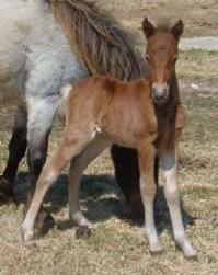 Colt out of Hopwood's Silver Laketa