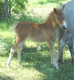 Filly out of Hopwood's Silver Peace Rose