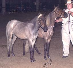 2003 Area VI National Show